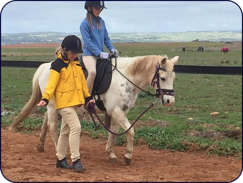 Adelaide Northern Horse Riding School - Madi