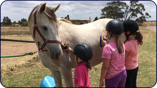 Adelaide Northern Horse Riding School - Sparkles