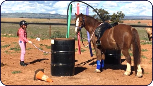 Adelaide Northern Horse Riding School - Will