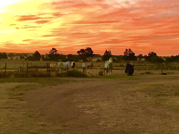 Horse Riding Barossa Valley - The Views At Alba View Equestrian
