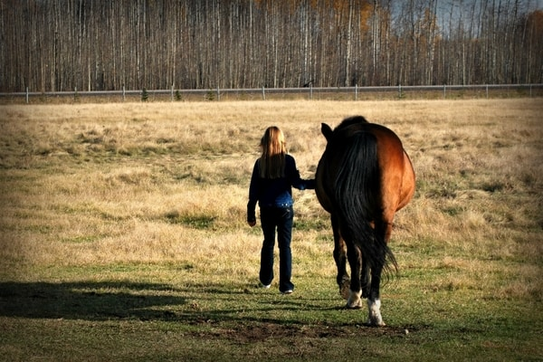 Horse Riding Tips - Leading