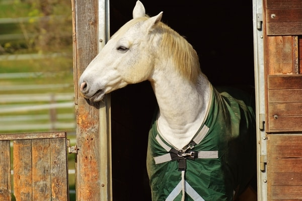 Horse Riding Tips - Horse Manners