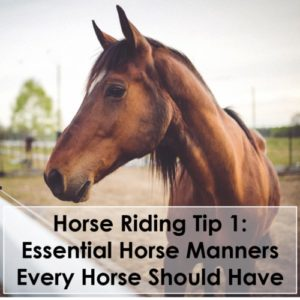 Horse Riding Tip 1 Essential Horse Manners Every Horse Should Have