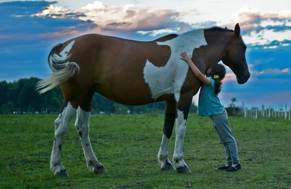 Learn To Ride A Horse Near Me - Rewarding Your Horse