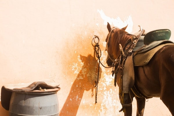 Learn To Ride A Horse Basics - Saddling Your Horse