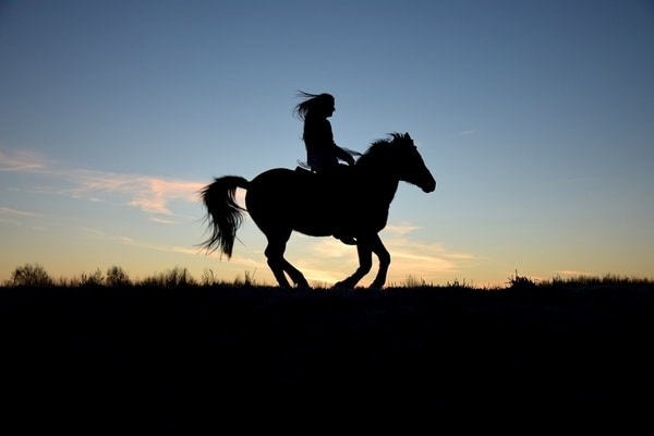 Learn To Ride A Horse Near Me - Trot, Jog & Canter