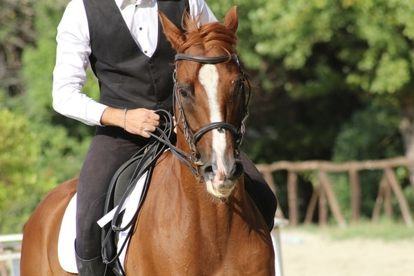 Common Horse Riding Mistakes - Killing The Reins
