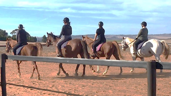 Alba View Equestrian Horse Riding Adelaide - Adult Horse Riding Lessons 2018-3