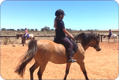 Alba View Equestrian Horse Riding School Adelaide - Horse Riding Lessons