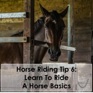 Horse Riding Tip 6 Learn To Ride A Horse Basics