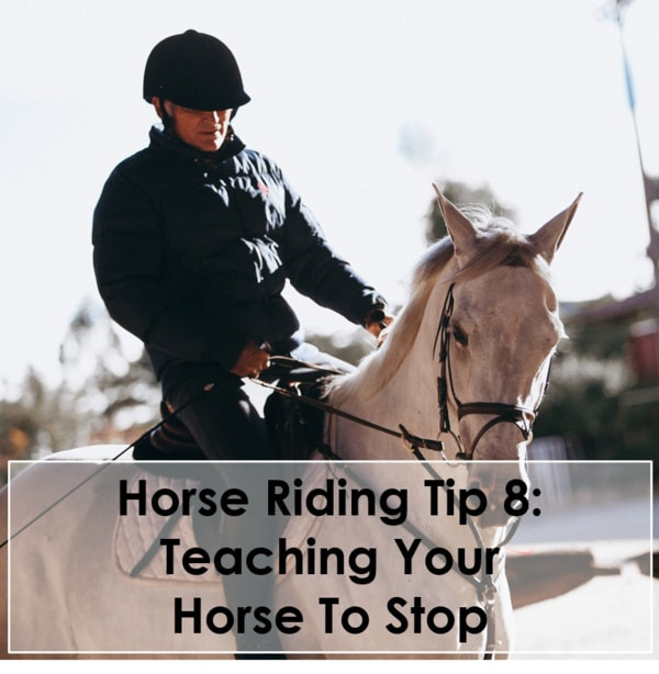 Horse Riding Tip 8 Teaching Your Horse To Stop